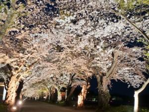 春の戸切地陣屋