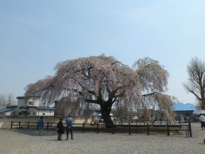 春の法亀寺